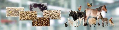 animal feed production business plan