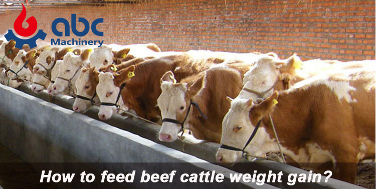 best feed for beef cattle