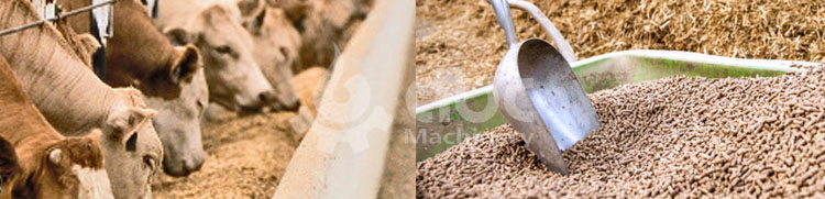 cattle feed manufacturing