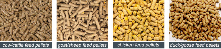 poultry feed manufacturing process report