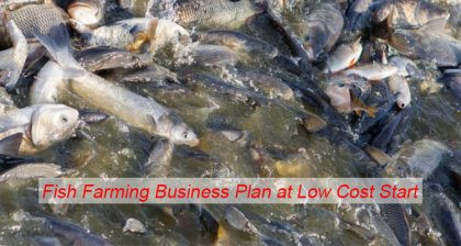 fish farming business plan at low cost start