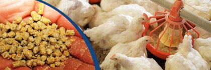 formula for making broiler feed