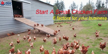 how to start a small chicken farm