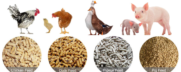 make poultry feed